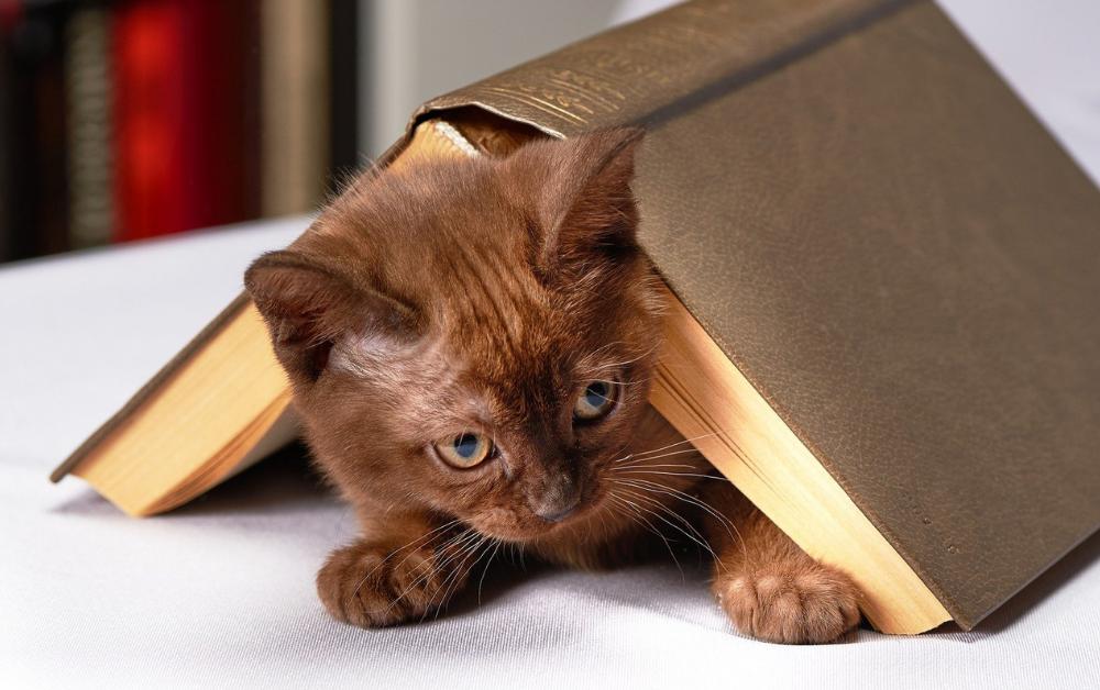 ESPECIAL TG | Livros de Pets para o Dia Mundial dos Animais